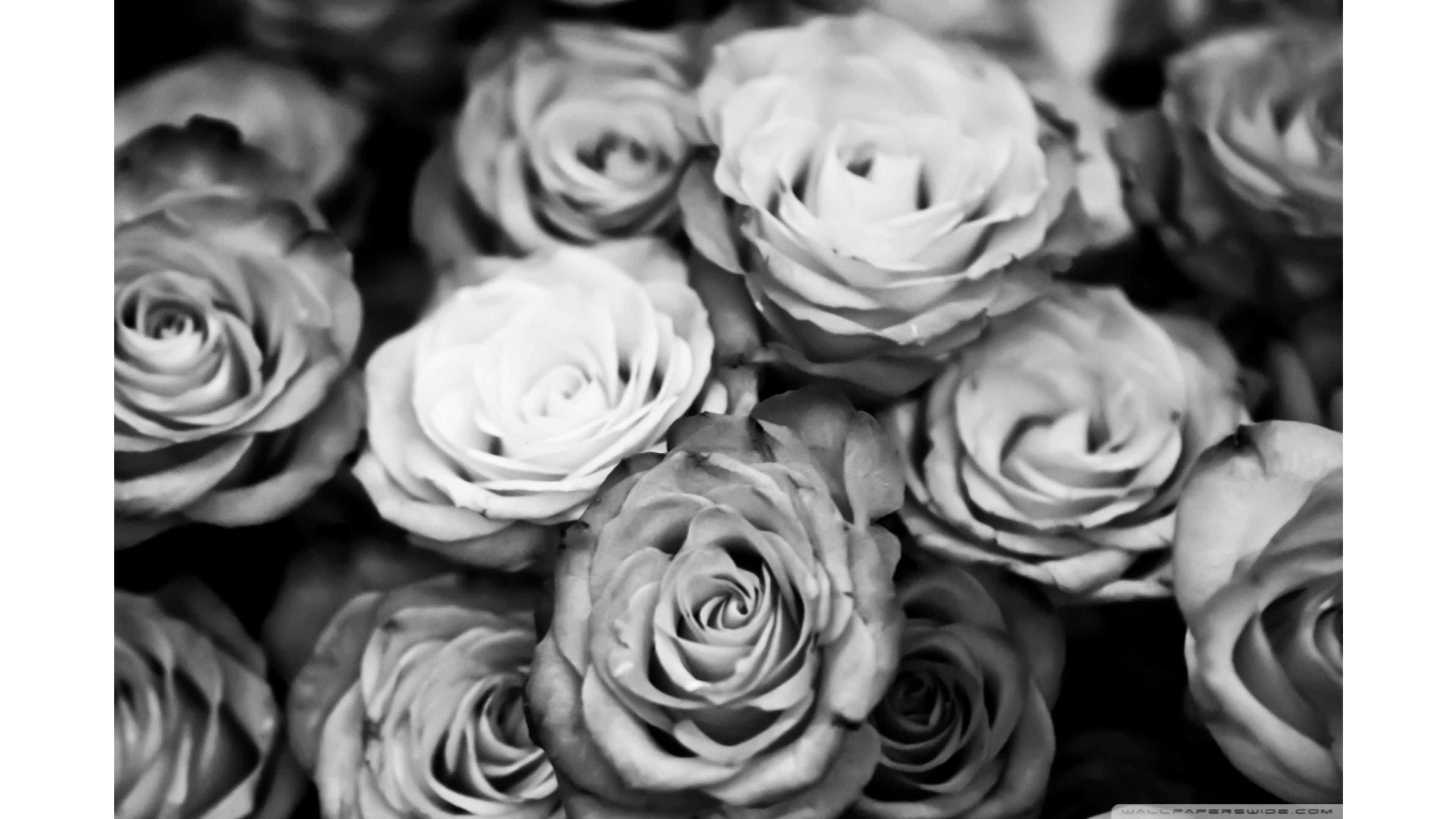 Black And White Roses Wallpaper 4k Jpg 3840 2160 Facebook Cover Images Facebook Cover Photos Flowers Facebook Cover Photos