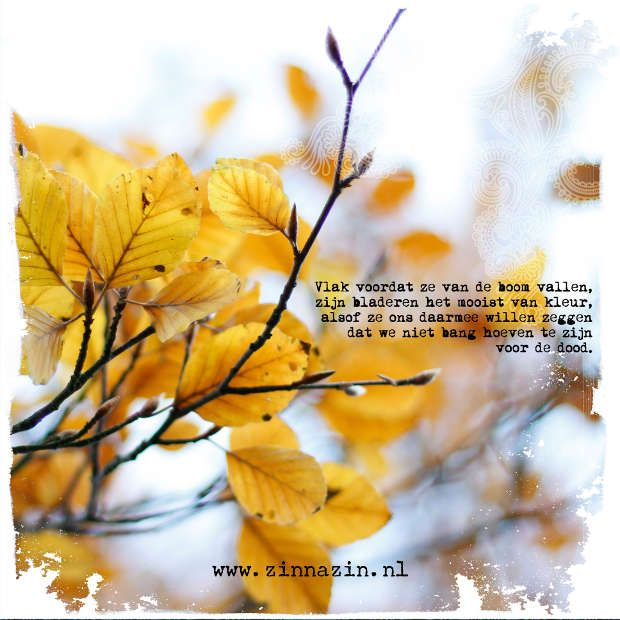 De troost van de herfst
