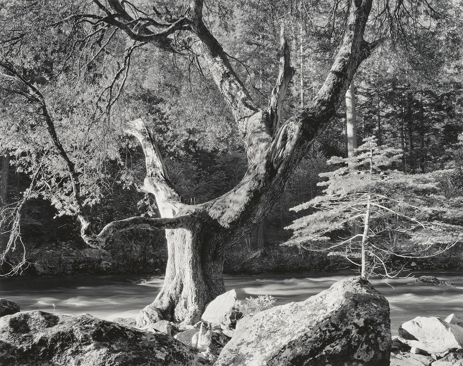 Early Morning Merced River by Ansel Adams