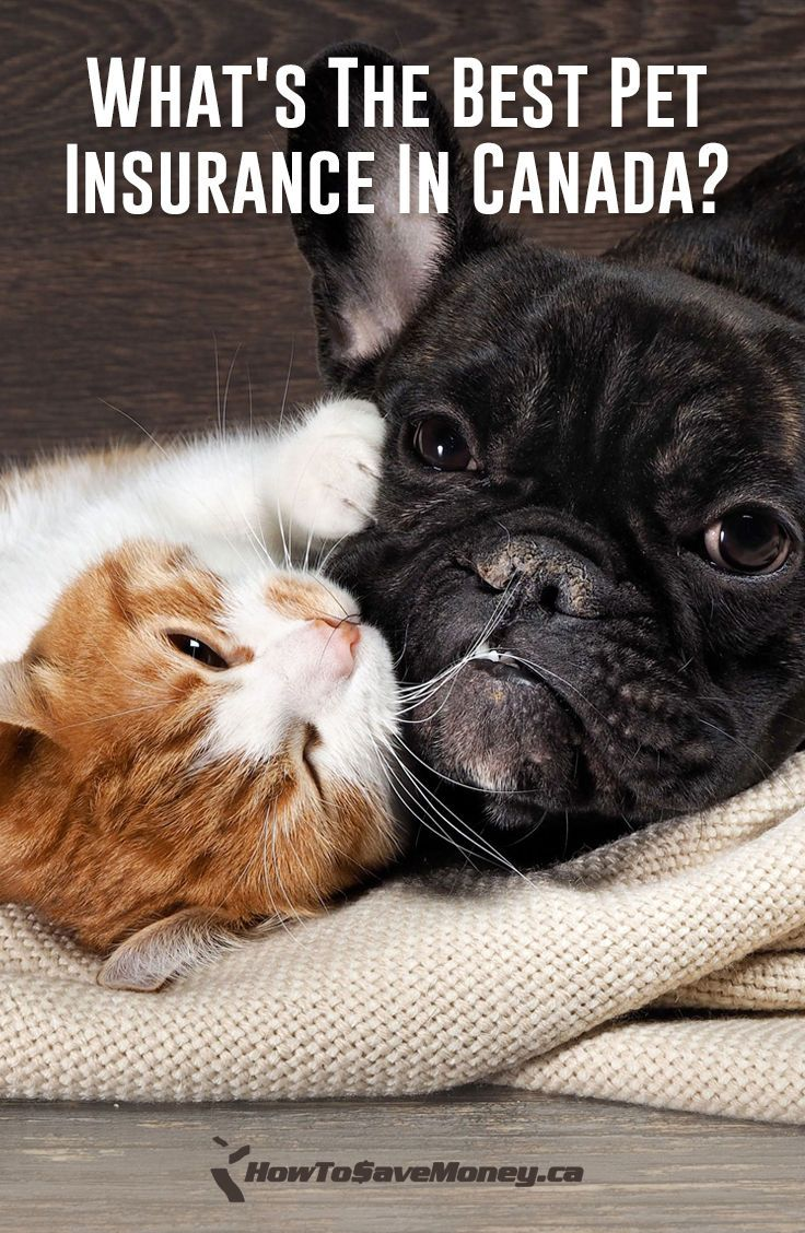 What's The Best Pet Insurance In Canada? Best pet insurance