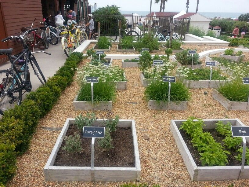 Charmant Landscape Architecture Design · Medicinal Plants · Herb Garden. Hotel Del  Coronado
