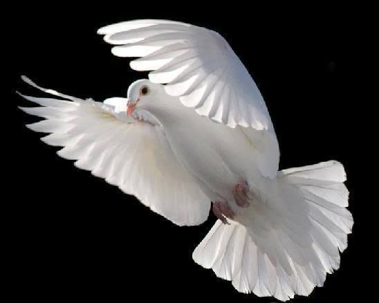 One Love, from Above, flown by a Dove....Peace + Prosperity....