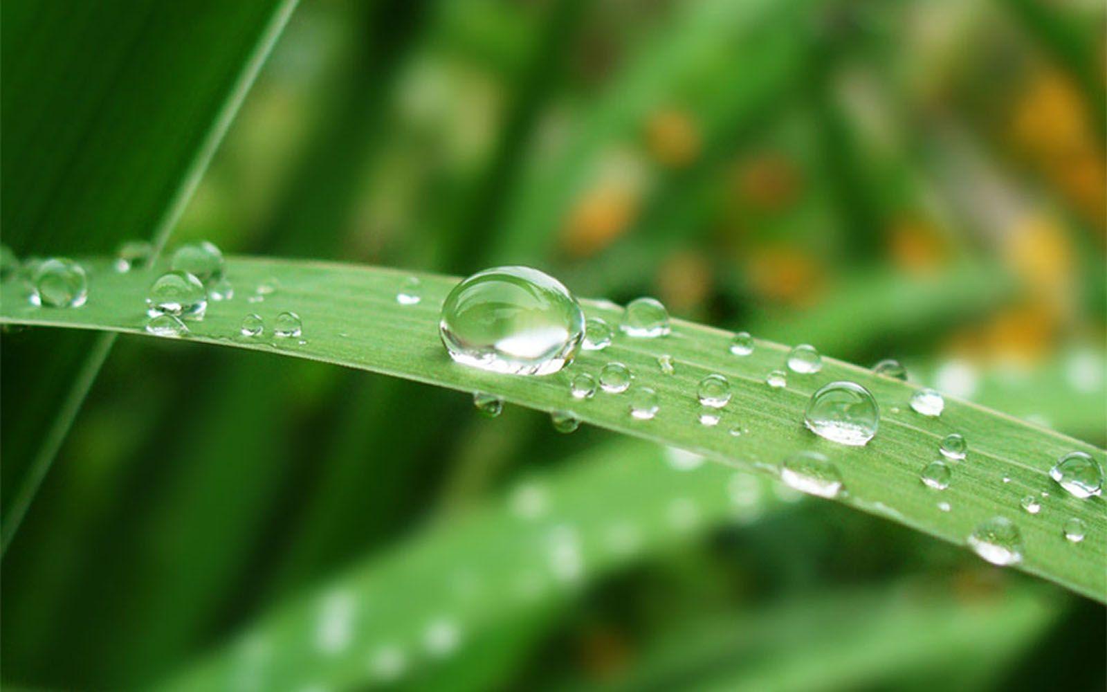 wallpapers: morning dew photographs | dew | pinterest | morning dew