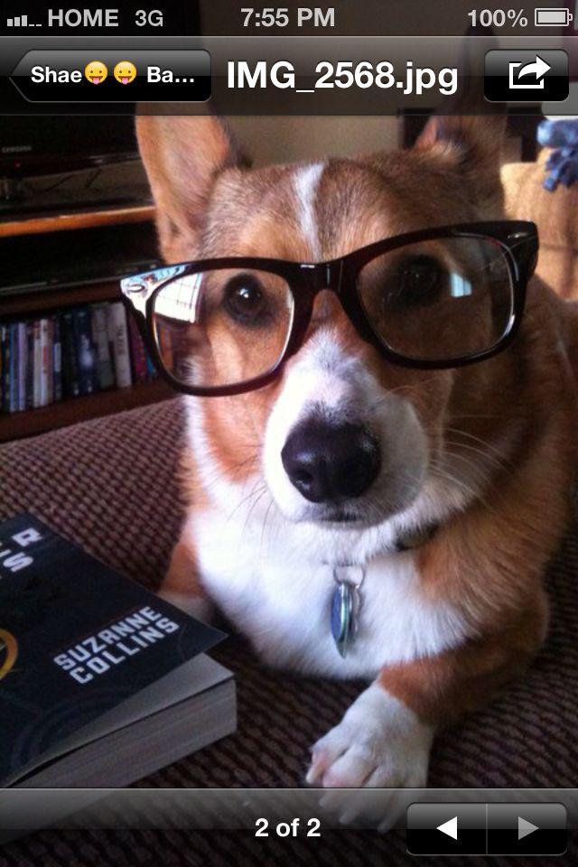 Hunger Games And A Corgi Corgi Cute Dogs And Puppies Dog