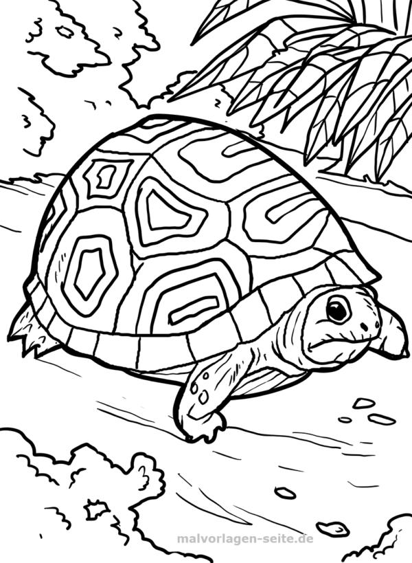 Malvorlage Schildkröte | Ausmalbilder schildkröte, Kostenlose ...