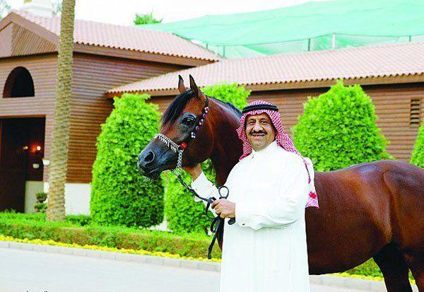 نبذة عن مزرعة خيل الخالدية إحدى رواد جمال الخيل العربية الأصيلة عالميا Arabian Horse Akhal Teke Teke