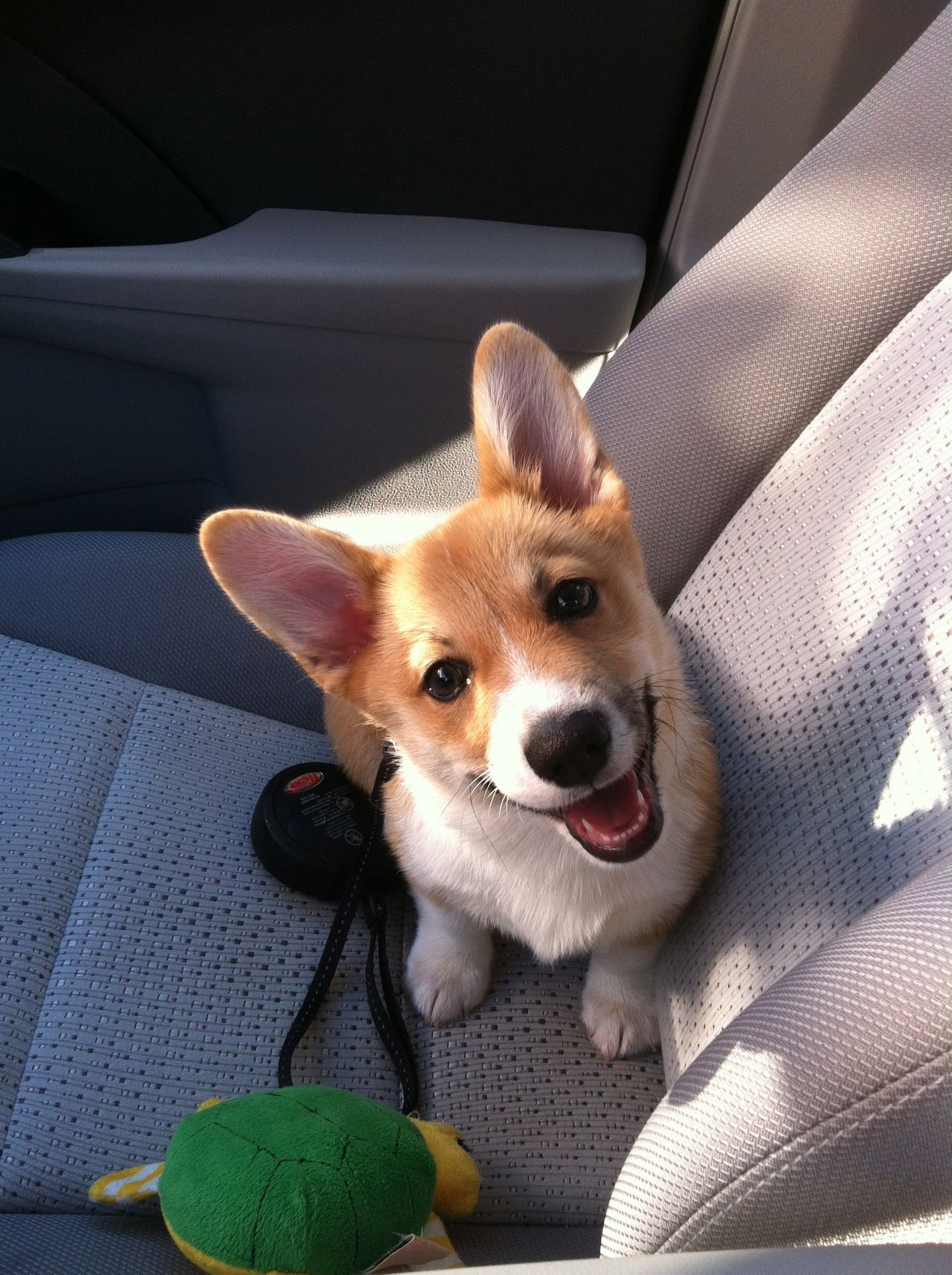 Friday's Top Ten, 9.20.13 Puppies, Cute