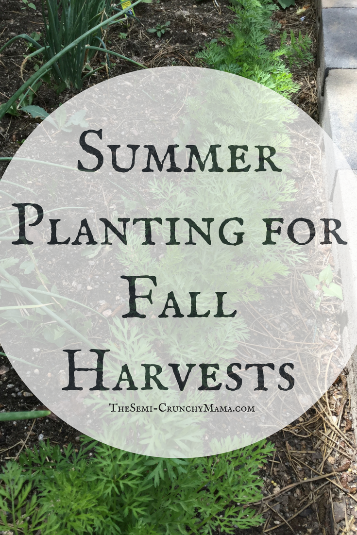 Summer Planting For Fall Harvests Fall Garden Vegetables 400 x 300