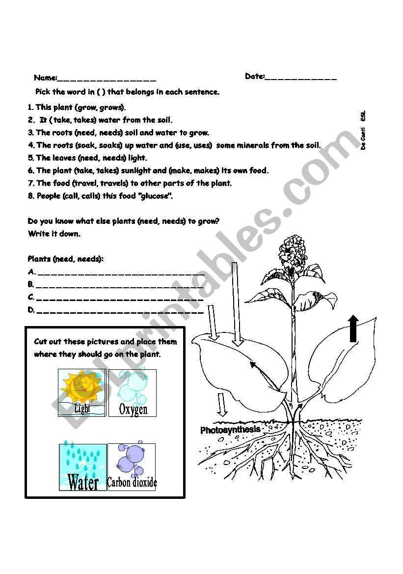 Photosynthesis ESL worksheet by belfer in 2020