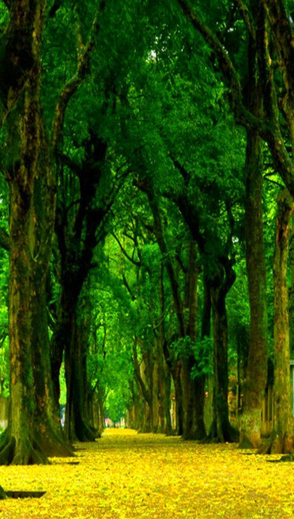 vietnam , capital hanoi , north vietnam (con imágenes