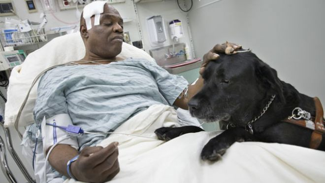 New York City Blind Man Saved By Guide Dog Will Have To Give Up
