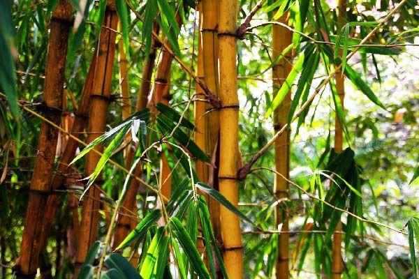 6 plantes qui attirent les nergies positives selon le feng shui bien tre plante porte - Plante d interieur porte bonheur ...