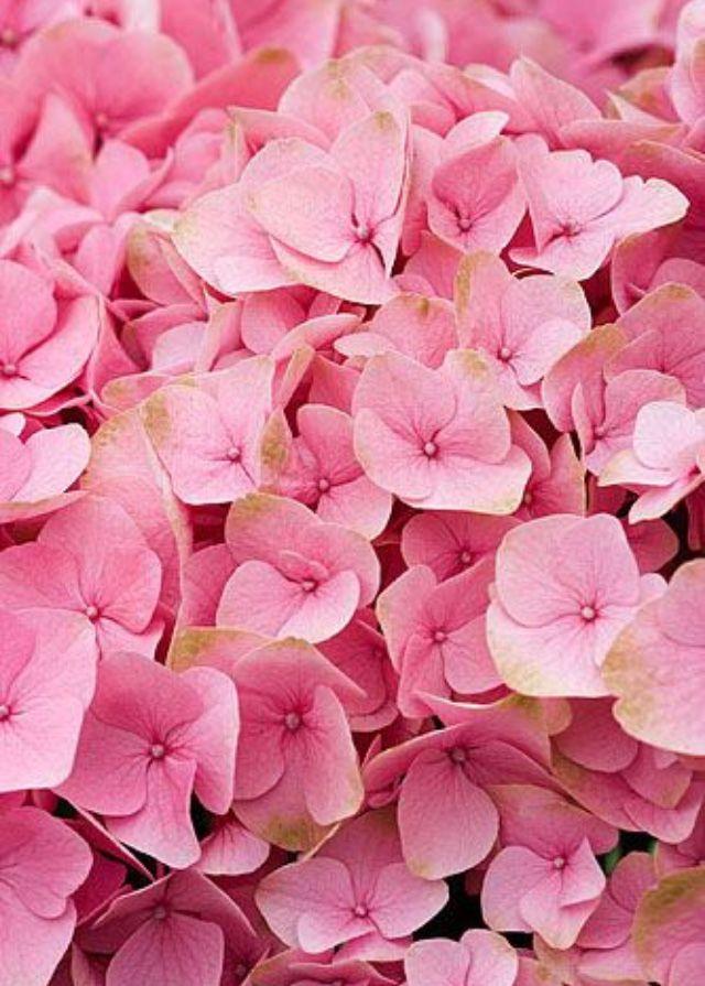 lindas flores rosadas pretty pink flowers flowers