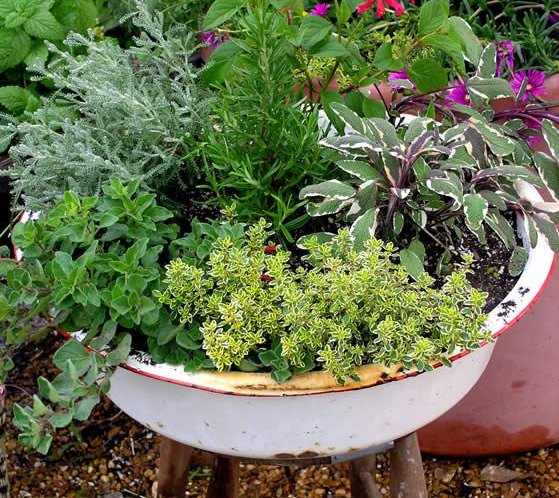 Mixed herbs pot.   Herb/Green Inspiration   Pinterest   Herbs, Herb on planters for herbs and spices, planters for terraces, planters for growing herbs, planters for vertical gardening, planters for home, planters for winter, planters for annuals, planters for trees, planters for roses, planters for rhubarb, planters for kitchen, planters for landscaping, planters for wildflowers, planters for pots, planters for transplanting, planters for lavender,