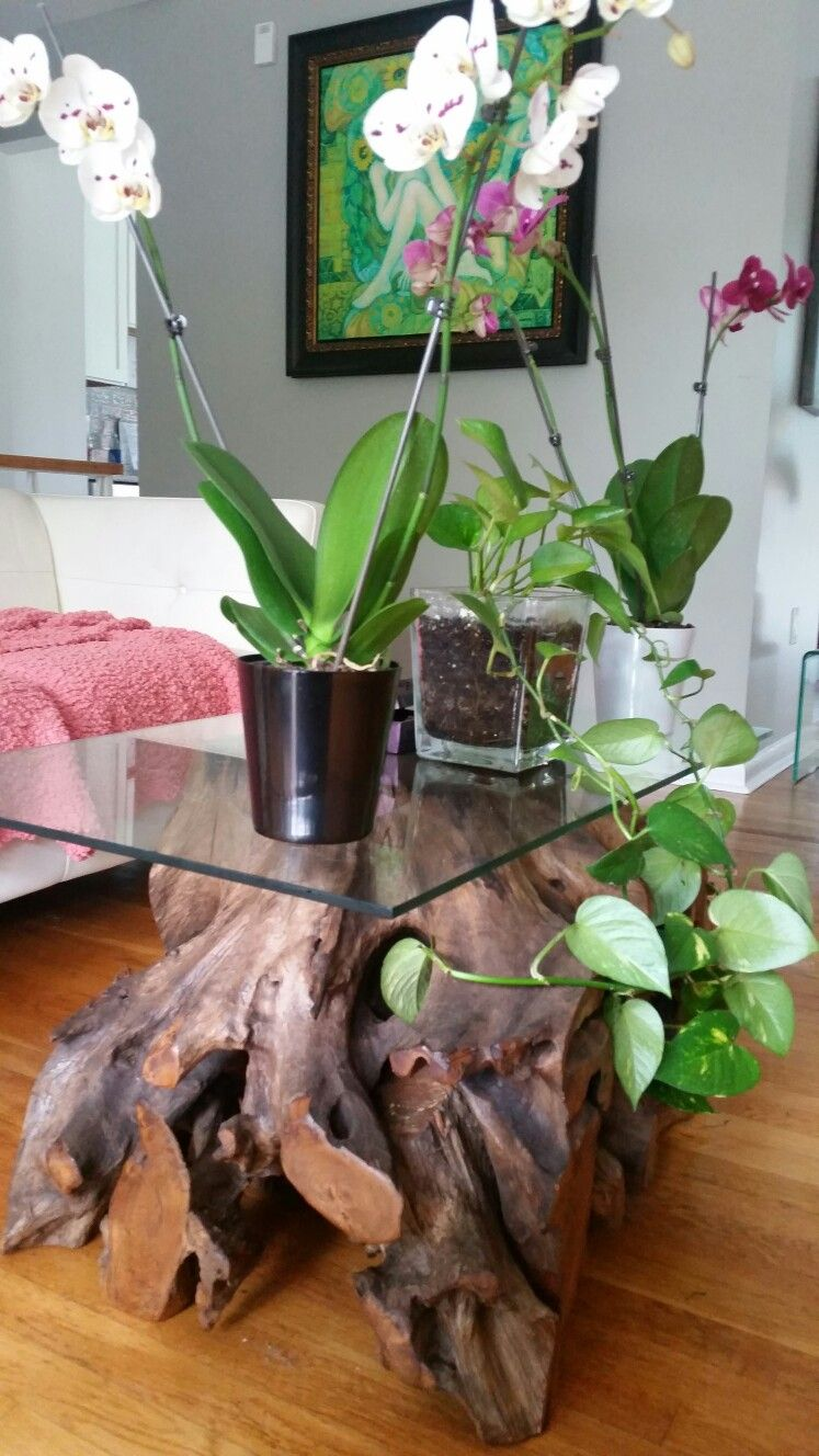 I was looking for a tree root table and found it in Home Goods...with the orchids and the plant it has a foresty look....