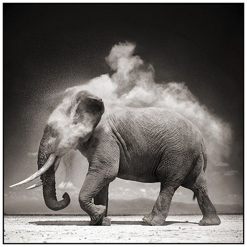 Image result for Image of an elephant smoking dope