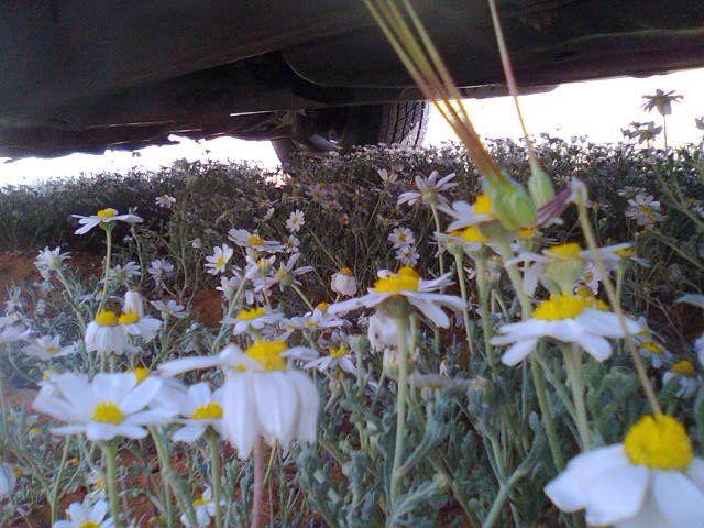 تصوير تاج راسي وأغلى ناس أبوي Plants