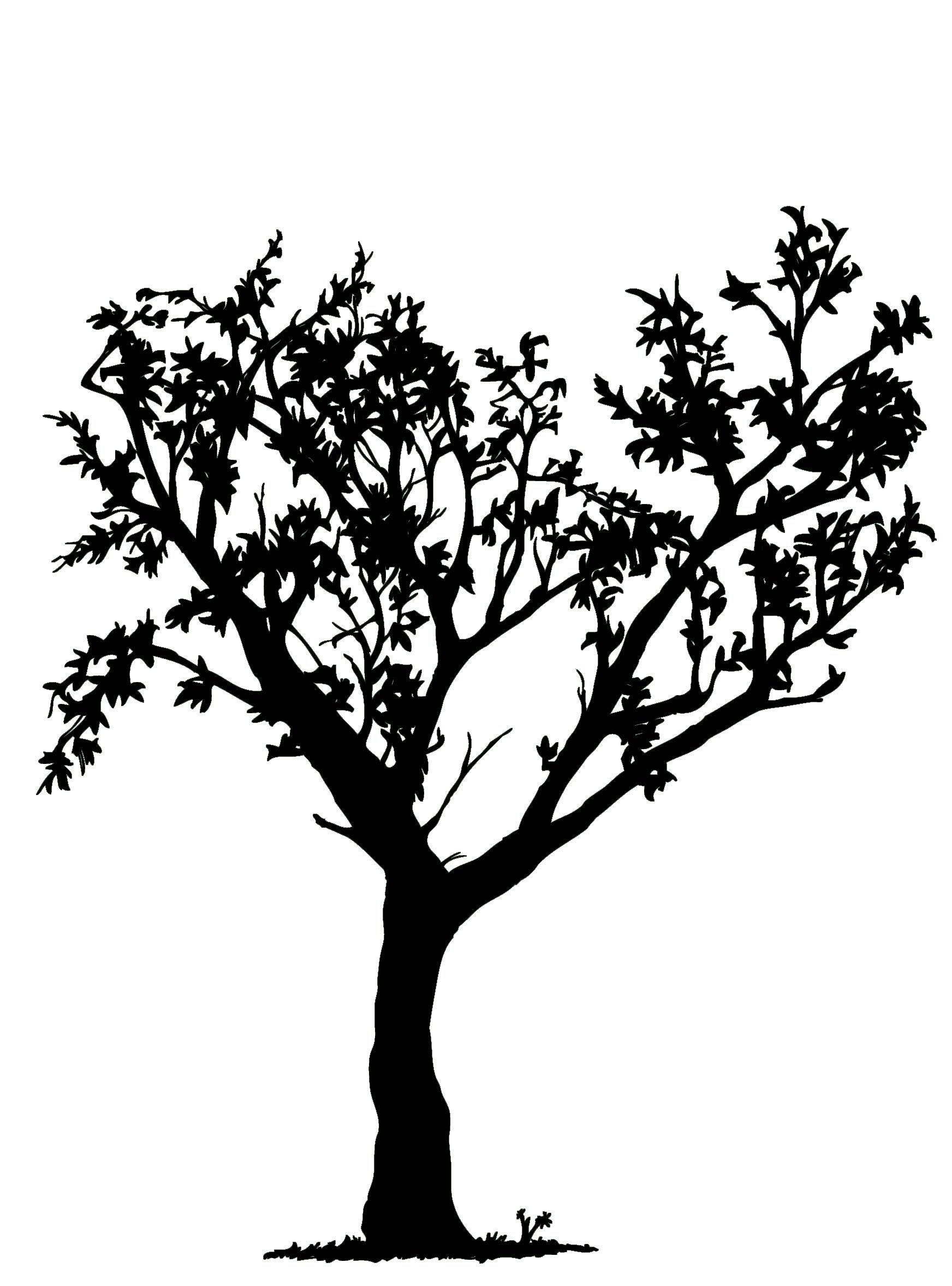 tree image black and white google search tree graphics pinterest google search and. Black Bedroom Furniture Sets. Home Design Ideas