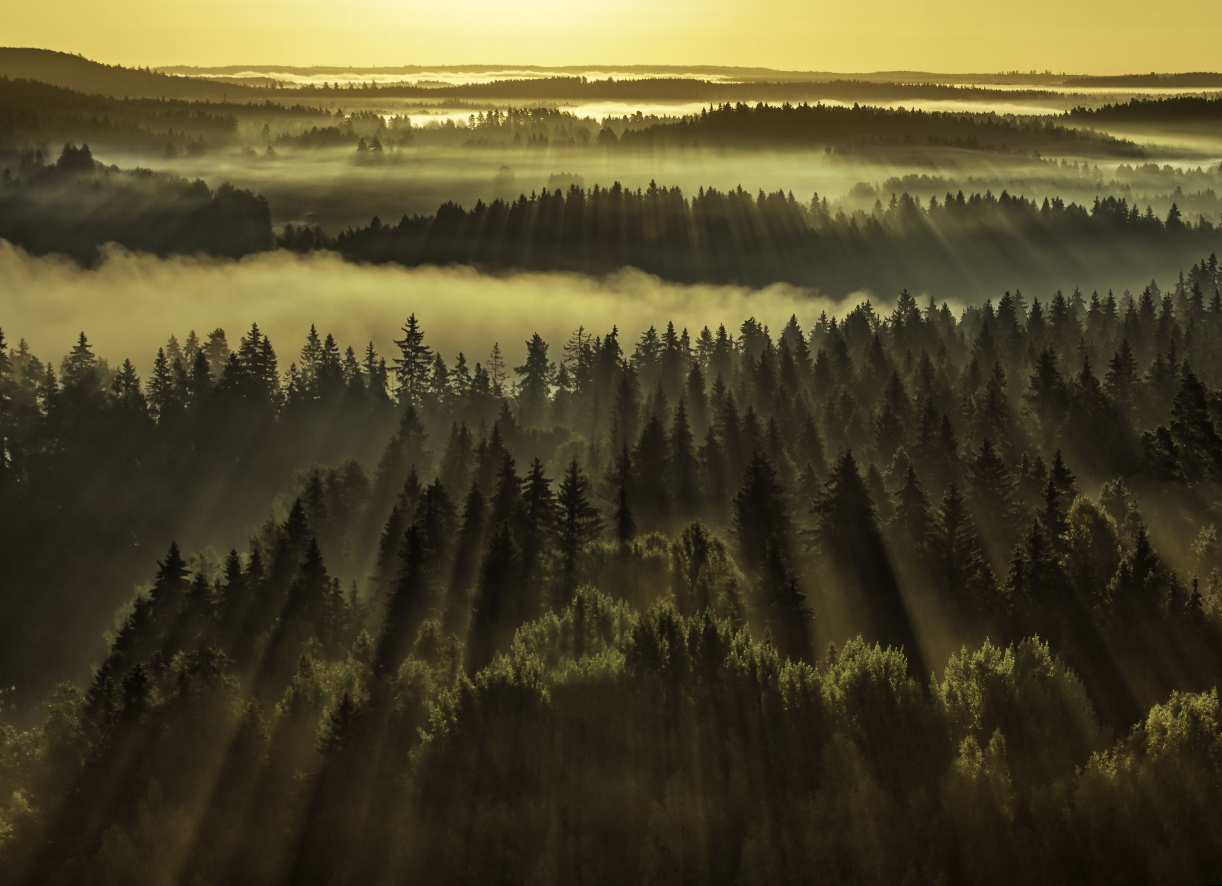Stunning sun rays shining through trees in a foggy forest. Vanajaveden laakso. Aulanko, H?meenlinna, Finland.