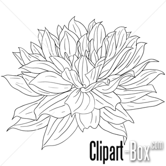 CLIPART DAHLIA FLOWER SKETCH STYLE