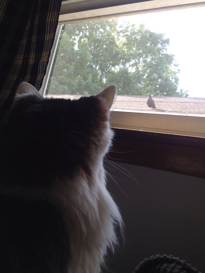 Cat and pigeon size each other up