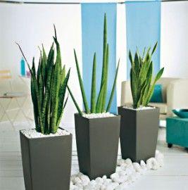 Nouveau look pour plantes sans soucis conseils plantes for Plante interieur originale