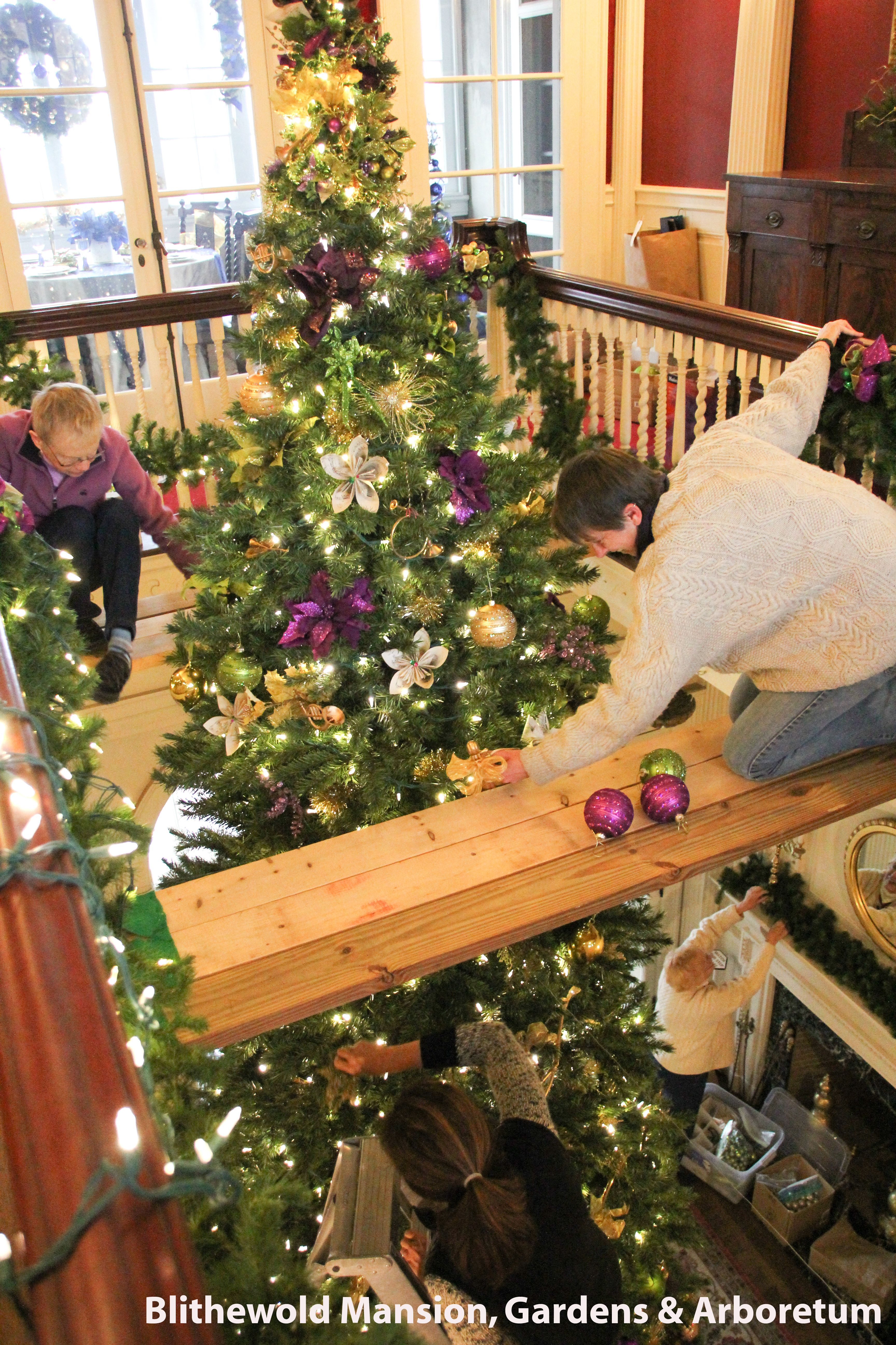 Decorating our 18 foot Christmas Tree Blithewold Mansion  (Photo by Allan Millora)