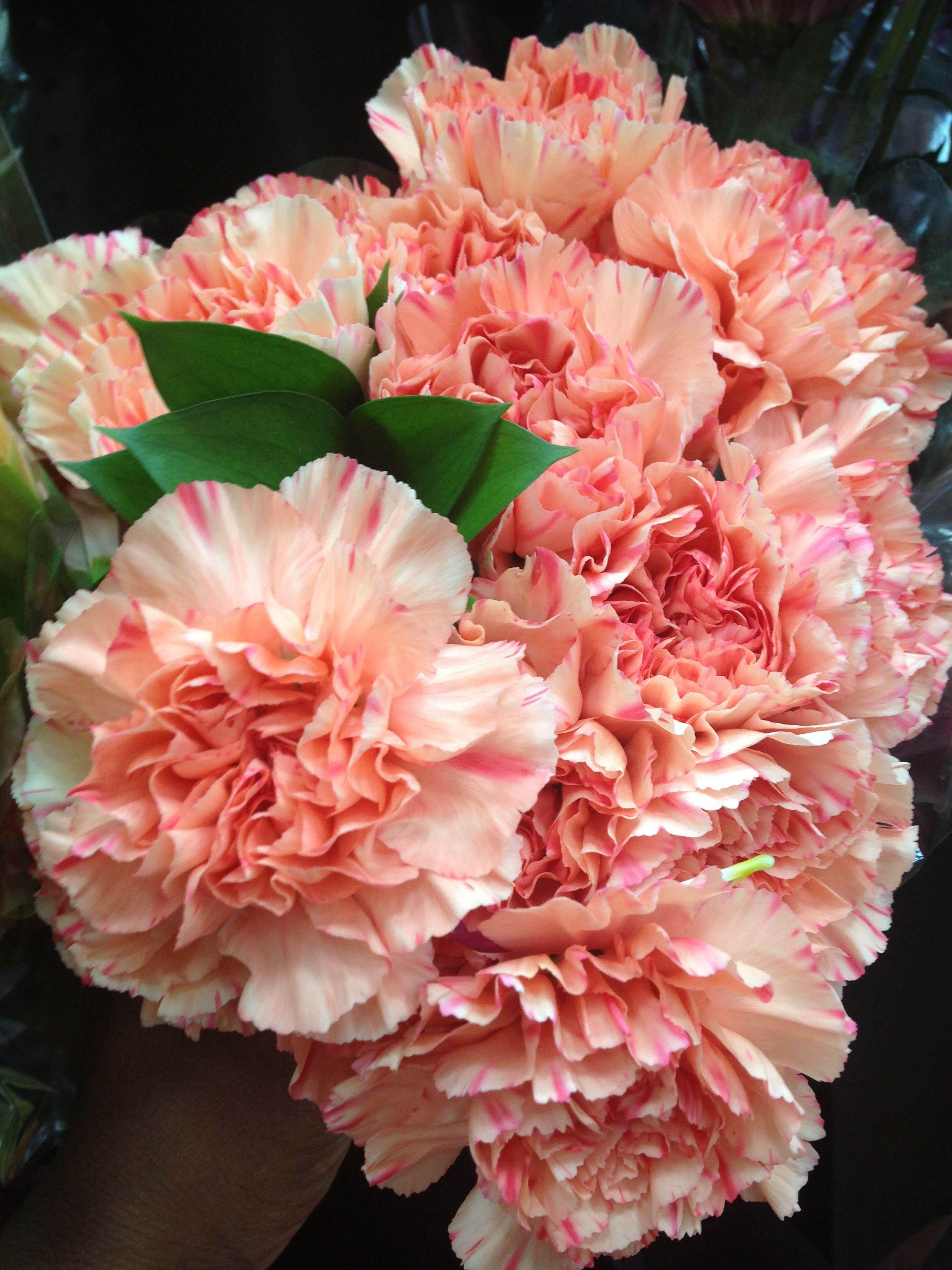 8a323d579ebbd Coral Carnations from Costco Costco, Bridal Flowers, Carnations, Pretty  Flowers, Bouquets,