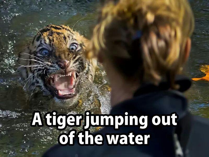 Frightening Animals