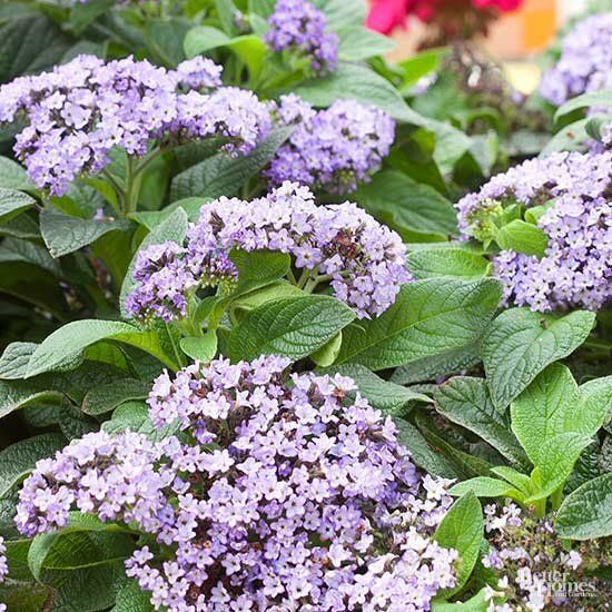 19 Deer- and Rabbit-Resistant Plants for Containers#containers #deer #plants #rabbitresistant