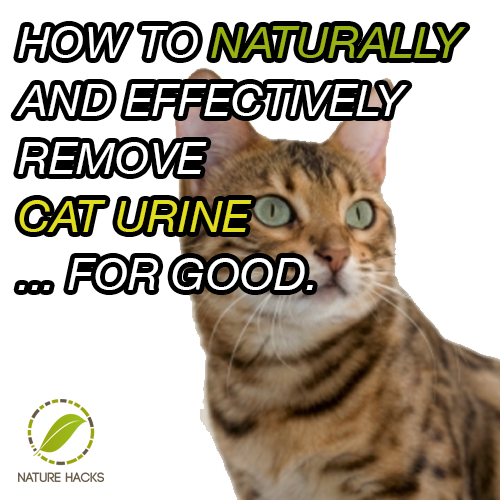 Remove Cat Urine Smell From Carpet Hydrogen Peroxide