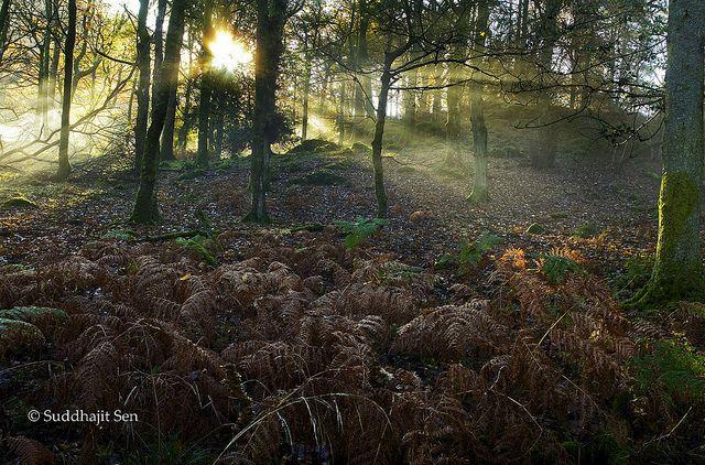 Ashness Wood by Suddhajit, via Flickr