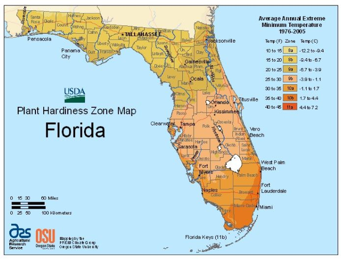Florida Vegetable Planting Calendar Vegetable Planting Calendar Plant Hardiness Zone Plant Hardiness Zone Map