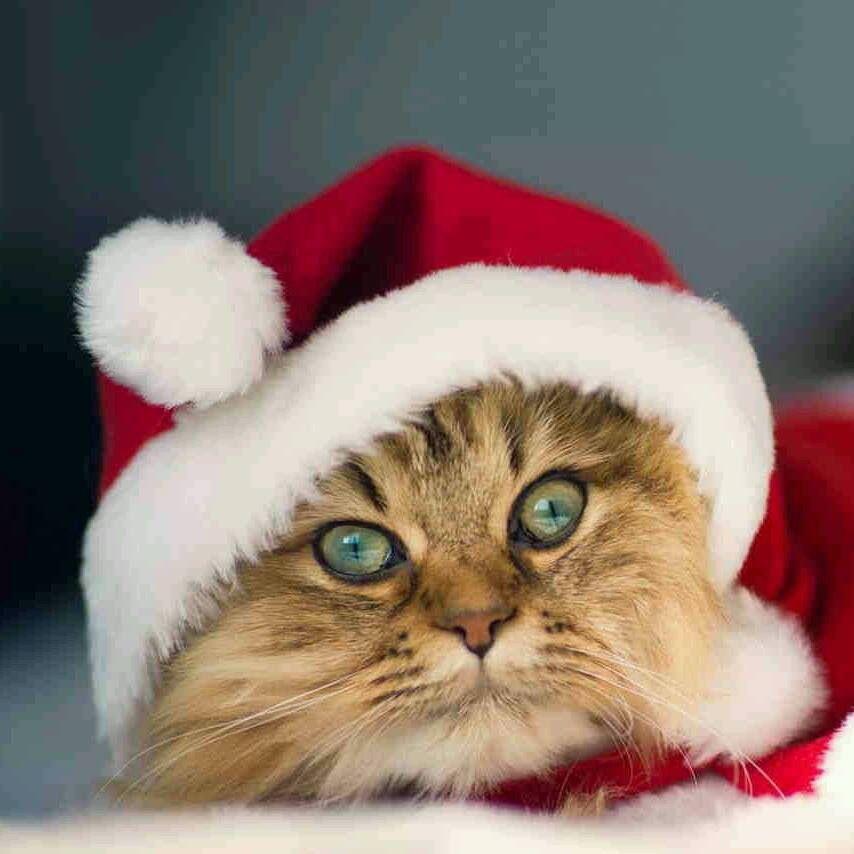 Meow..good kitty