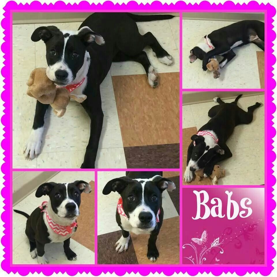 Puppies for rescue in illinois