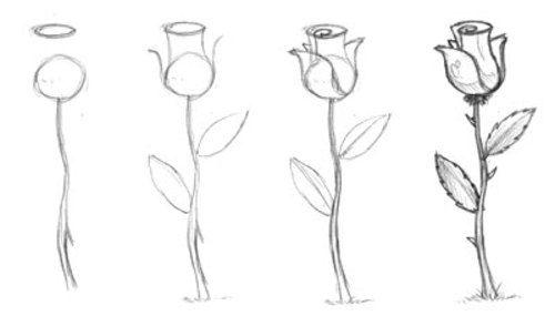 Como Dibujar Una Rosa Paso A Paso Dibujos Como Dibujar Rosas