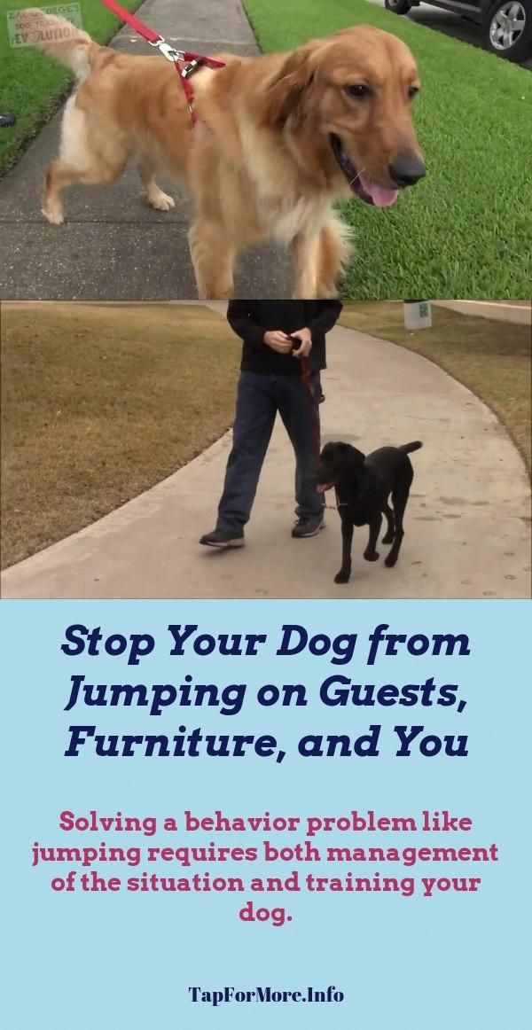 Stop Dog Jumping And Alpha Dog Training Check The Pic For Lots