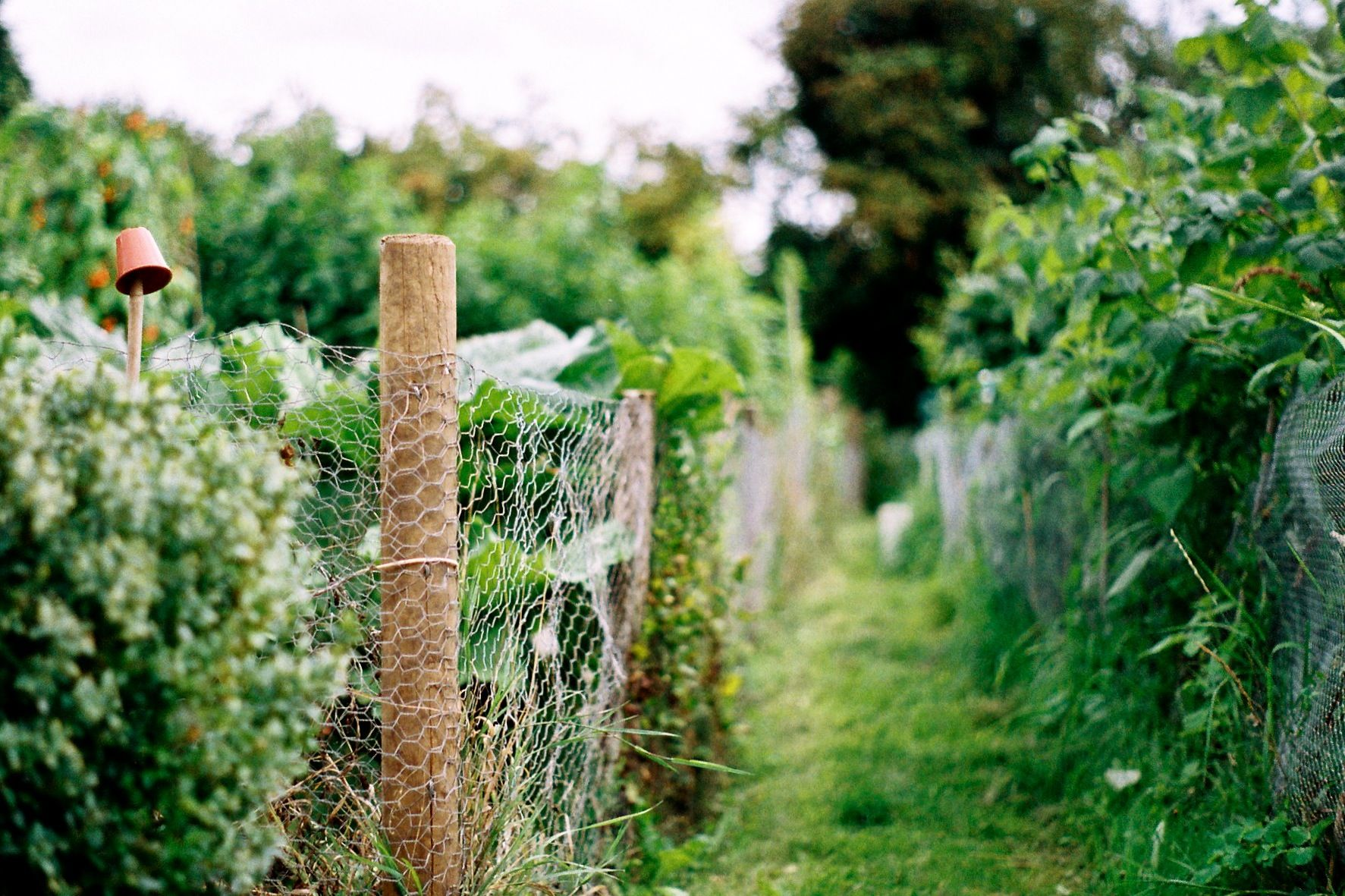 Clever Ideas for Springtime Fencing Projects