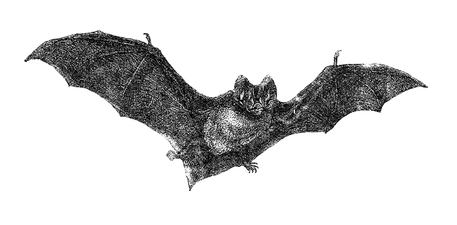 small resolution of vintage halloween bats free halloween clip art vintage flying bat graphic 1885