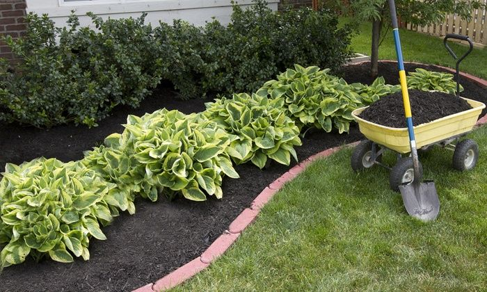 Mixed Hosta Plants 9 12 18 Pack Garden Small Backyard
