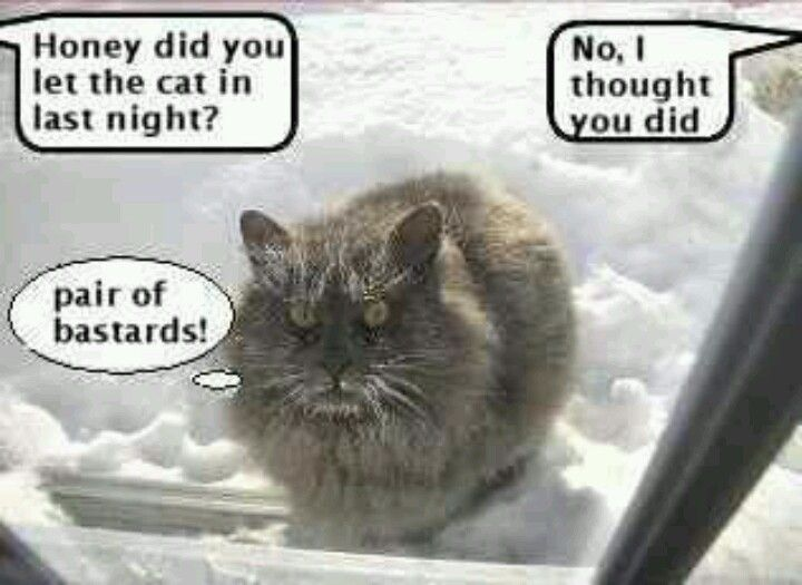 Ahh Poor Kitty Facebook Humor Funny Funny Cats