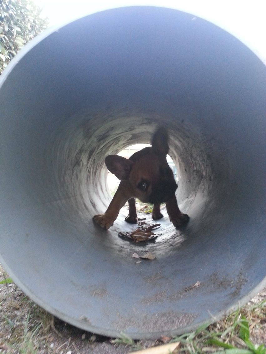 In the pipe