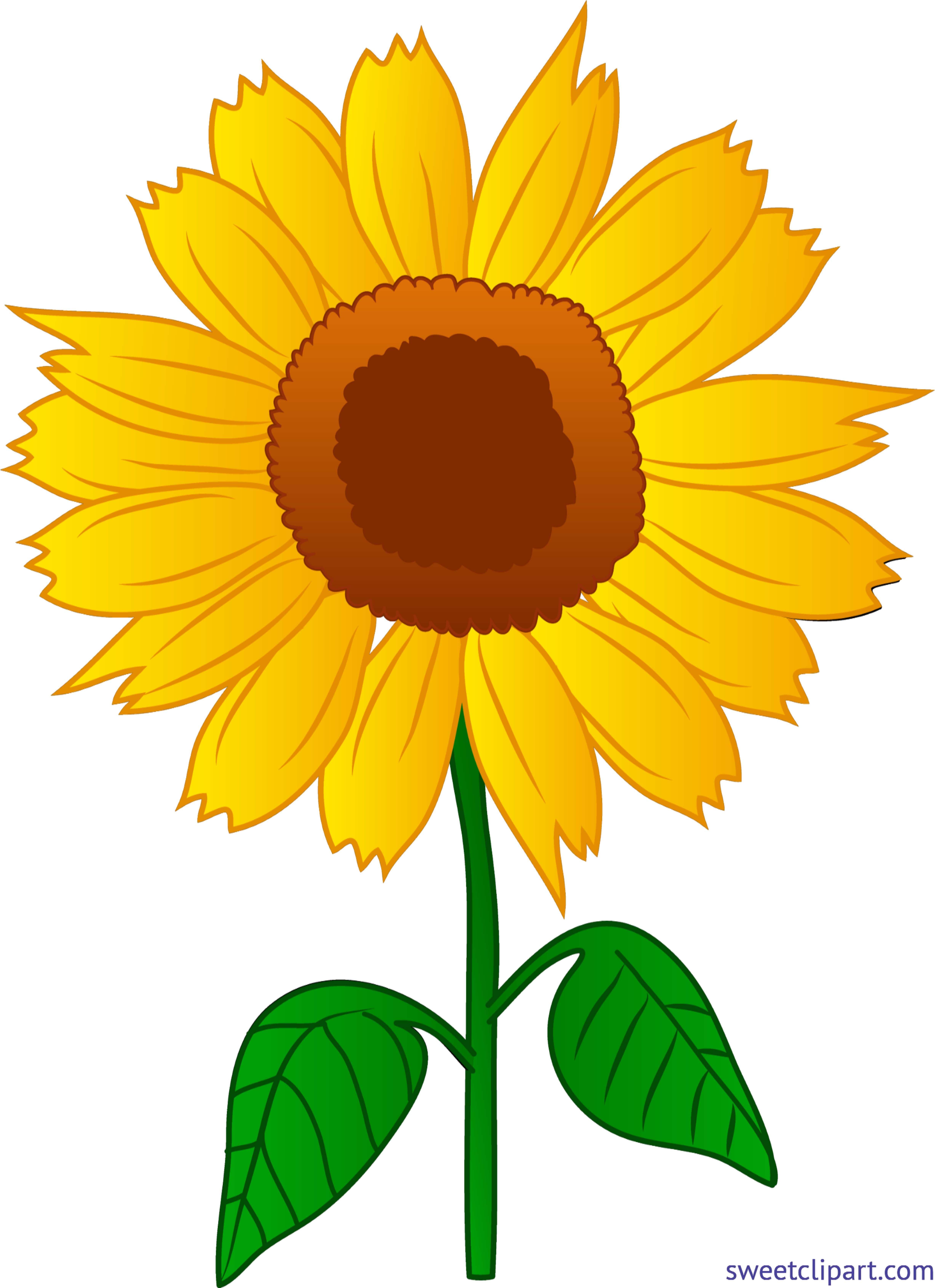 Pretty Sunflower Clip Art Sunflower Pictures Clip Art Borders Flower Clipart