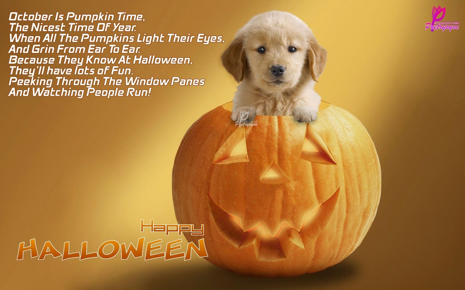 Cute halloween puppy halloween puppy dog halloween dog