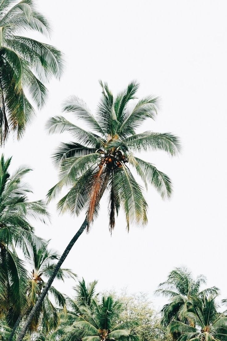 Palm Trees Camping Hiking Driving Sky Diving Sun Bathing Sight Seeing Discovering Exploring Escaping Falling Palm Tree Photography Palm Trees Nature