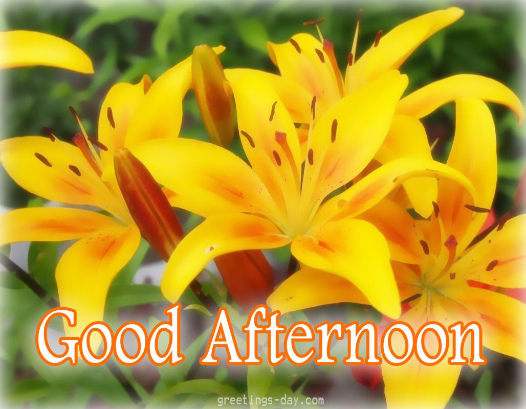 Good Afternoon Daily Pics Photos Greetings Goodafternoon