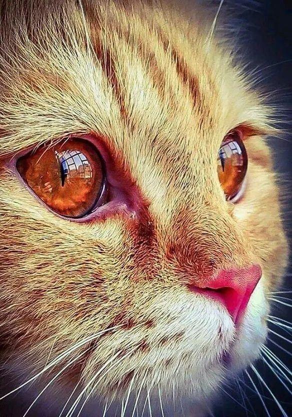 Pin von Vy Nguyen auf Photography Katzen, Katzen fotos
