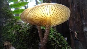 희귀버섯에 대한 이미지 검색결과
