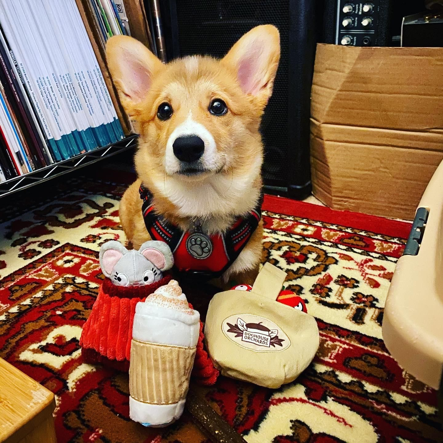 Our sweet boy Ein with his first Barkbox!