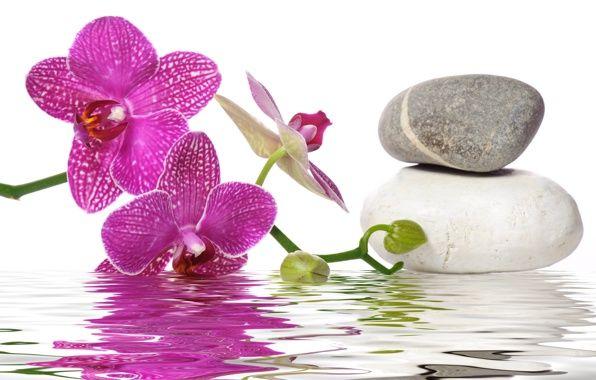 Обои картинки фото вода, спа камни, цветы, орхидея ...